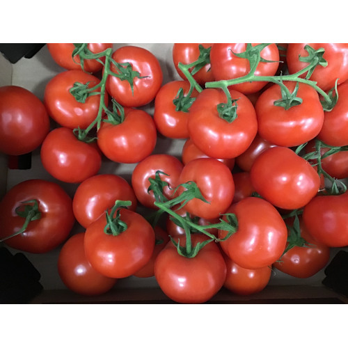 Tomatoes on a branch, 1kg