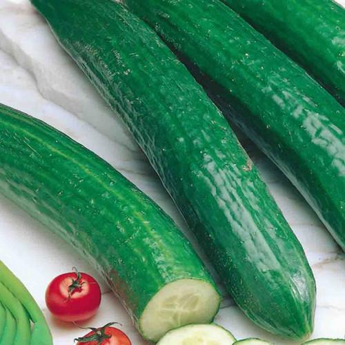 Long cucumber, 1 pc.