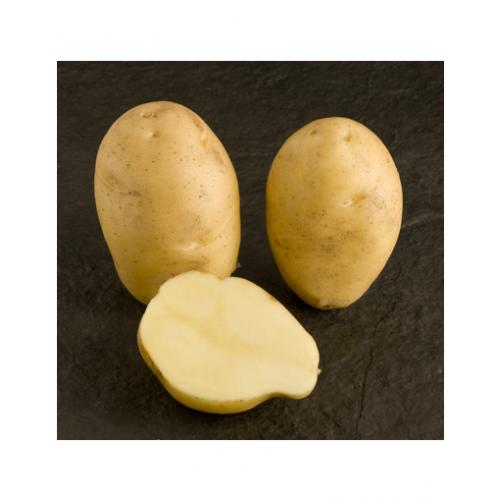 Nicola potatoes slightly crumbly, 3kg